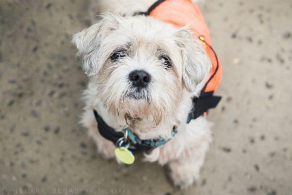 Badass Brooklyn Animal Rescuepagesepsitename%%