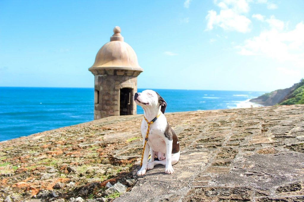 Satos are Puerto Rican Street Dogs, and You Can Adopt One - LIFE WITH DOGS
