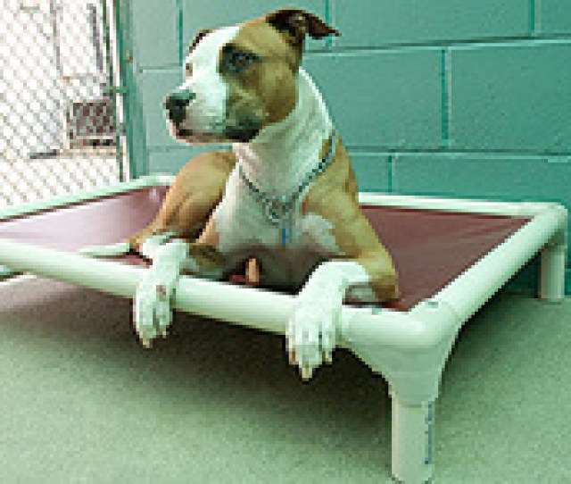Pet Friends Could Use Some Kuranda Dog Beds These Are Ideal For Kennels If You Would Like To Help Please Click This Link Kuranda Dog Beds For Kennels