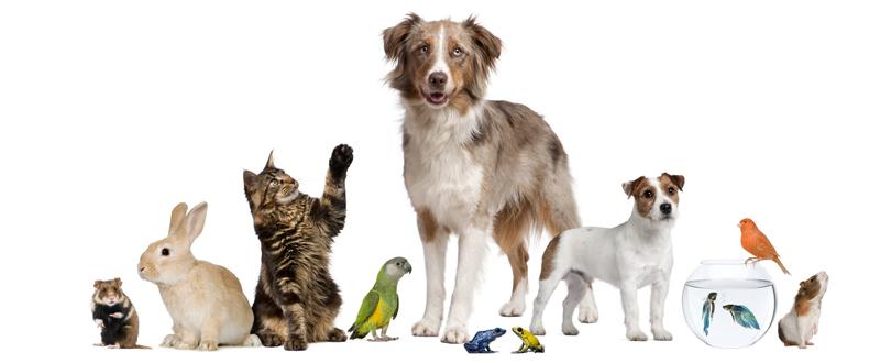 evcil hayvanlar ile ilgili görsel sonucu