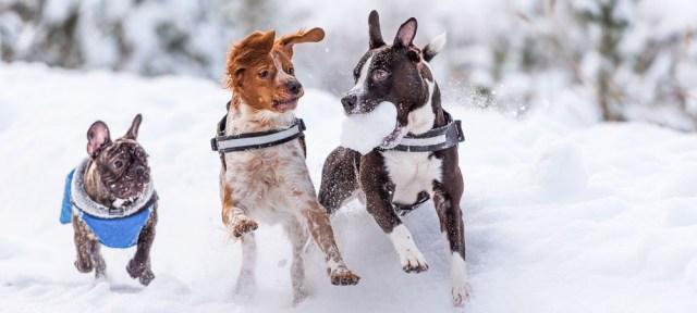 psi-u-snegu-igra