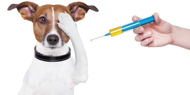 pas-kod-veterinara