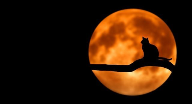 crna mačka-pun-mesec