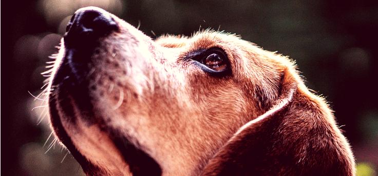 zašto se psi boje ovih 5 stvari