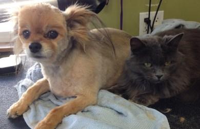 TiggerO&Smokey