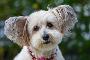 Why Use water Enhancers for Dogs