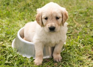 Should I Let My Dog Drink Anything Besides water?
