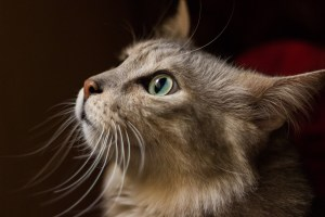 Foods for the Cats when they are overweight and underweight