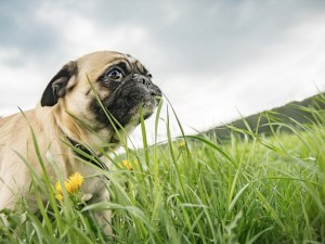 How Can I Stop My Dog from Eating Grass and Dirt?