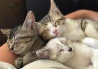 shelter-challenge-cat-house-on-kings