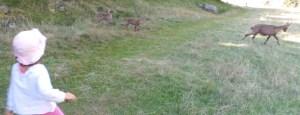 Chamonix, parc de Merlet, on approche vraiment les animaux