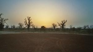 Voyage, baobabs