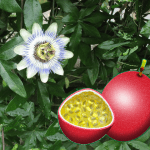 passion_fruits