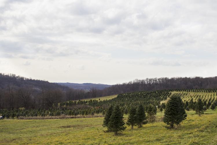 christmastree2015-8