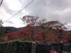 20161129 Arashiyama 28