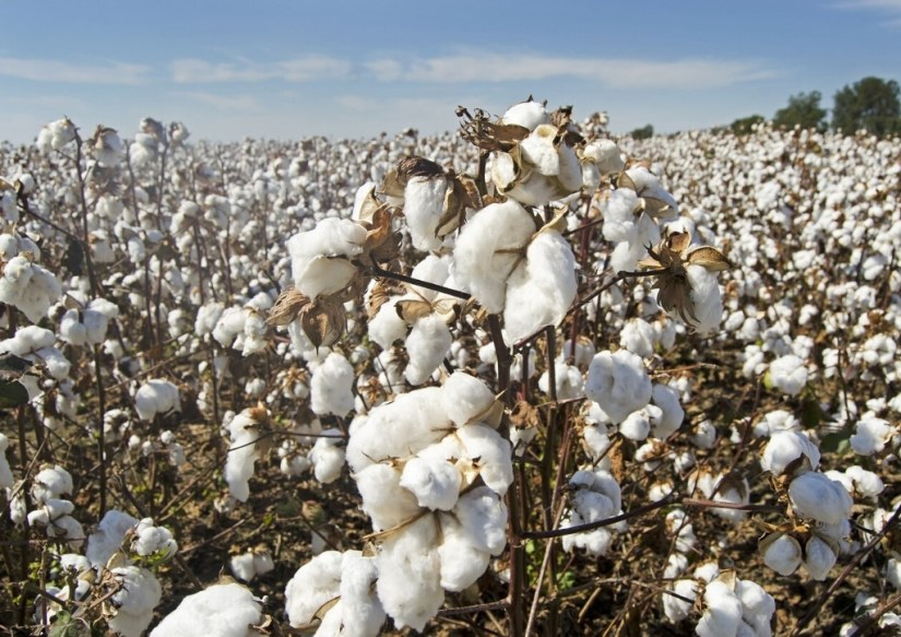 Le coton, un tissu adapté pour les lingettes lavables pour bébé