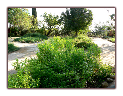 Jardin d'herbes arômatiques