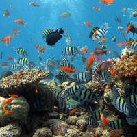 Les différents types d'aquarium