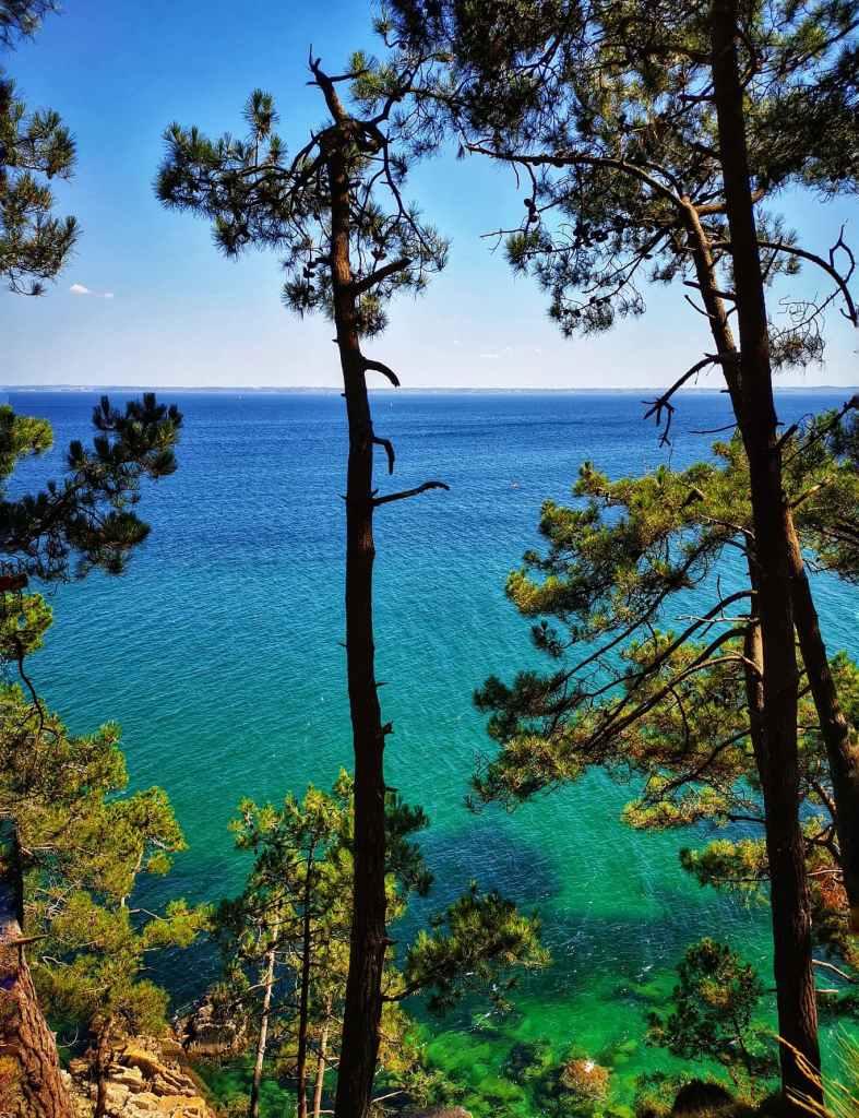 arbre et eau turquoise