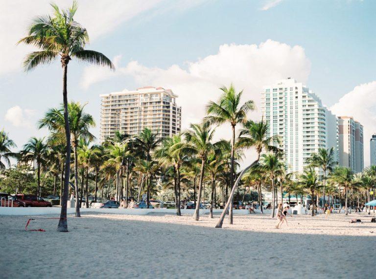 palmier sur la plage avec building miami