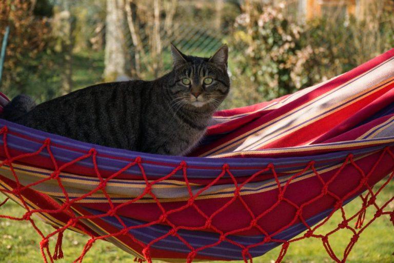chat dans le hamac
