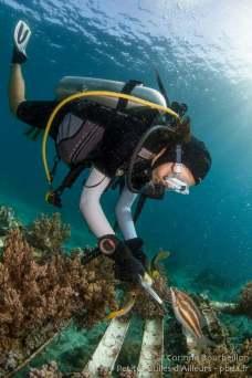 "Clara prélève de nouvelles ""boutures"" de corail. Coral Eye, Bangka Island. Sulawesi, Indonésie. Mars 2013."