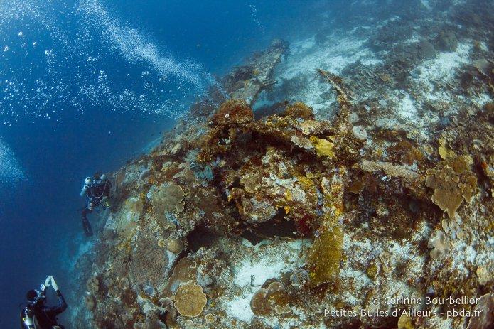 Diving Indonesia November