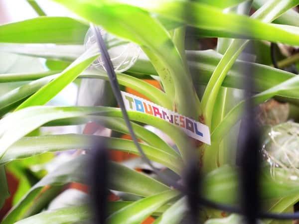 cacher un objet dans une plante pour une chasse au trésor