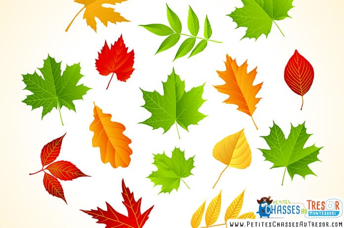 Atelier nature avec des feuilles