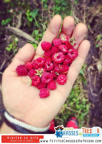 Faire la cueillette des fruit rouge avec les enfants