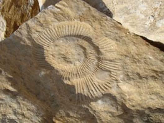 Des fossiles et figurines de dinosaures peuvent aussi constituer un boîte d'avant la préhistoire