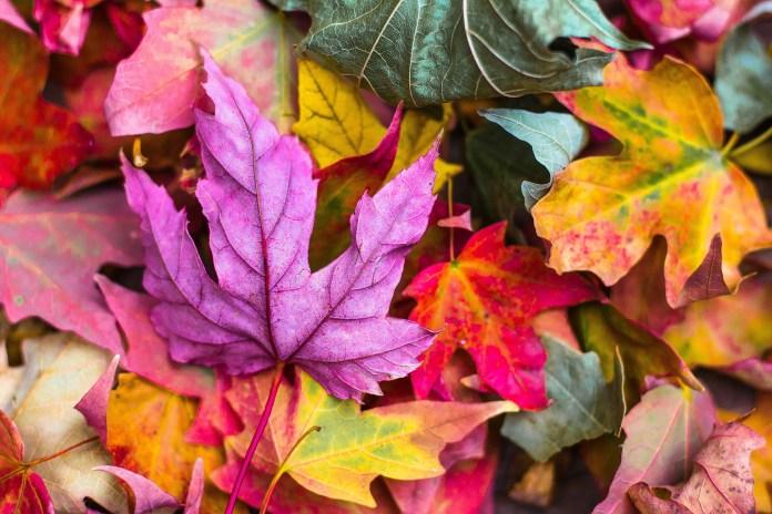 activité automne enfant feuilles