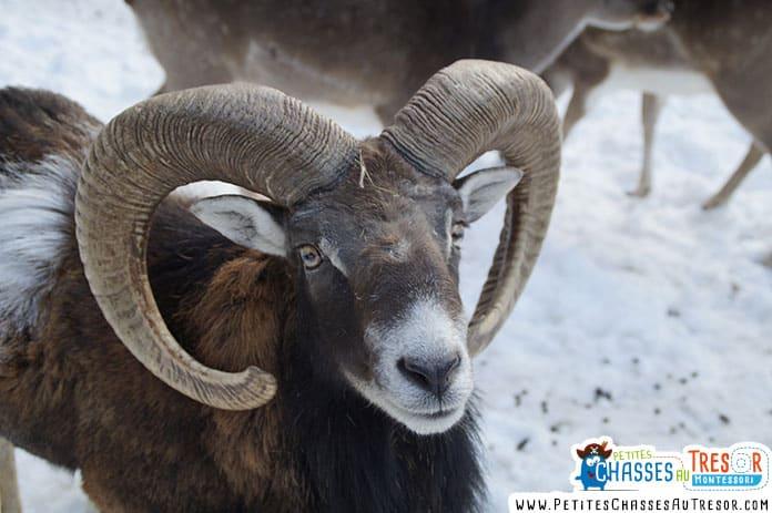 animaux à voir en hiver
