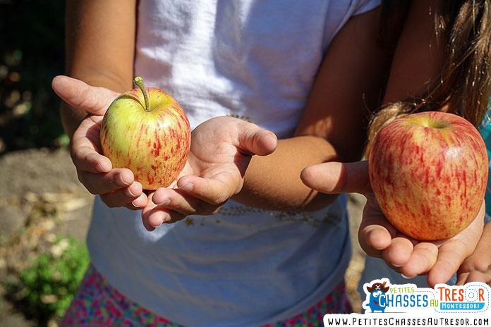 enfant qui observe une pomme