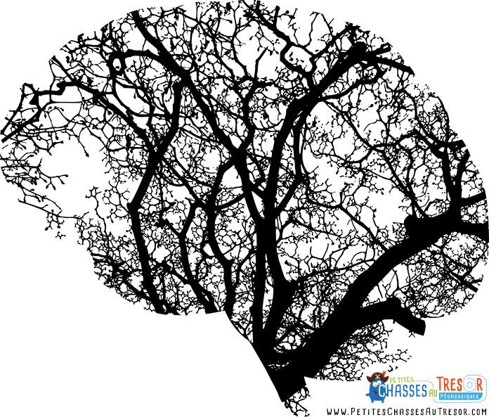Les connexions dans le cerveau ressemblent à un arbre
