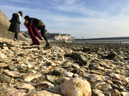 We walked down the shoreline plucking seashells from the seawall before heading up the hill.