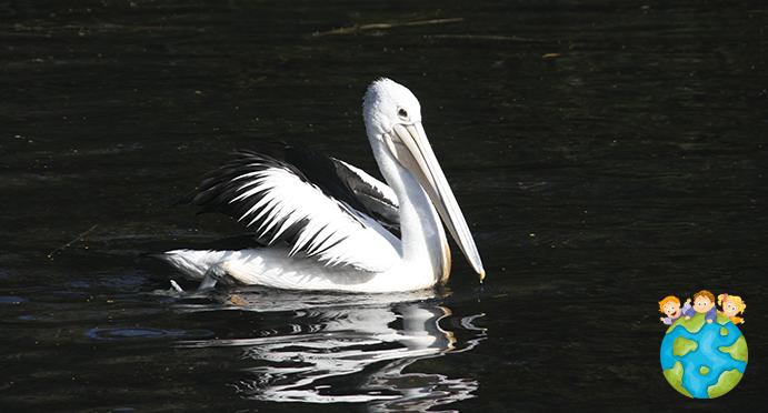 Pelican Petits Globetrotteurs