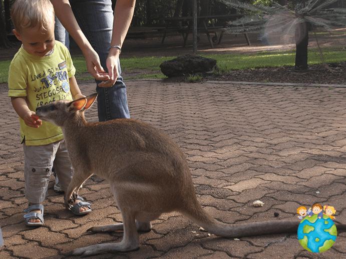 Petits Globetrotteurs en Australie - Wallaby