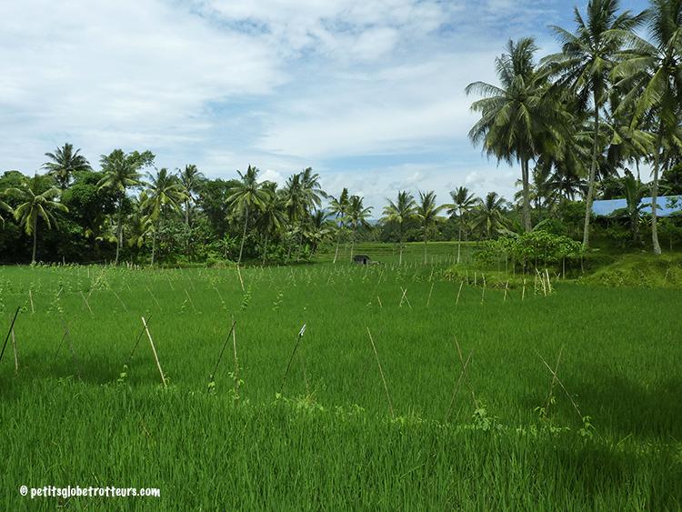 Rizières de Lombok - Petits Globetrotteurs