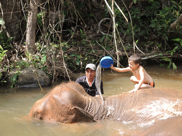 éléphants (3)