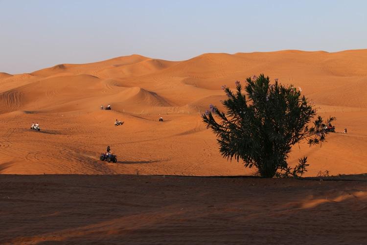 desert de dubai en famille