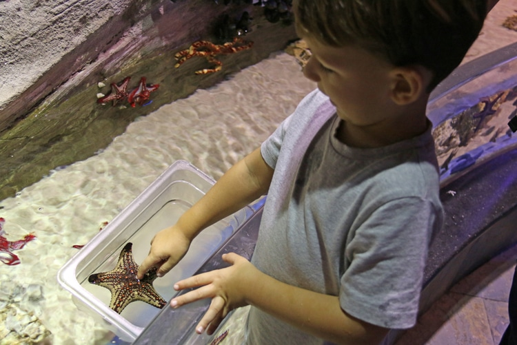 Aquarium Dubai
