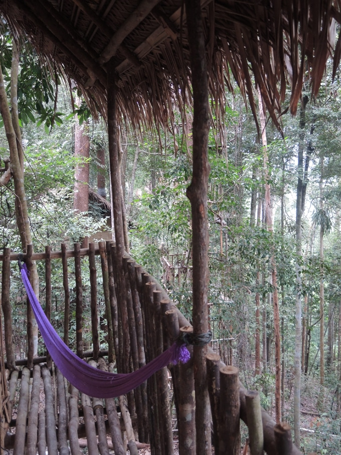 rainforest treehouse malaisie