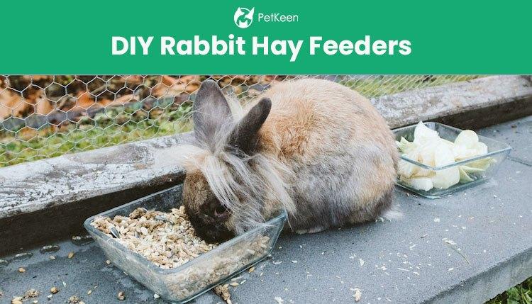 7 simple diy rabbit hay feeders you can