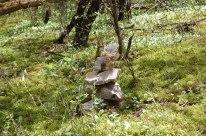 petkid-walk-in-the-woods_DSC_0901