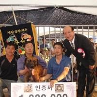 Japon Dövüş Köpeği: Tosa Inu