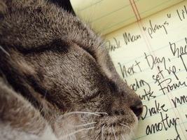 kediler_edebiyat.jpg