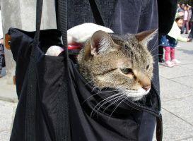 kedi_ile_yolculuk