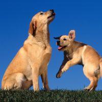Köpeğin Vücut Dili