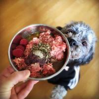 Yetişkin köpekler için ev yemeği tarifi